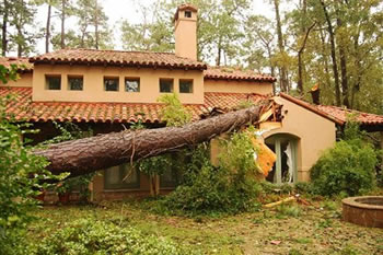 Home damaged by fallen Tree, Hurricane Tornado Windstorm Damage